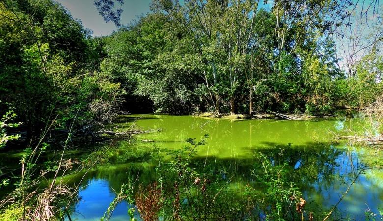 lake-1581659_960_720.jpg