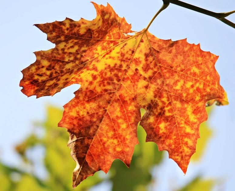 autumn-1638473_960_720.jpg