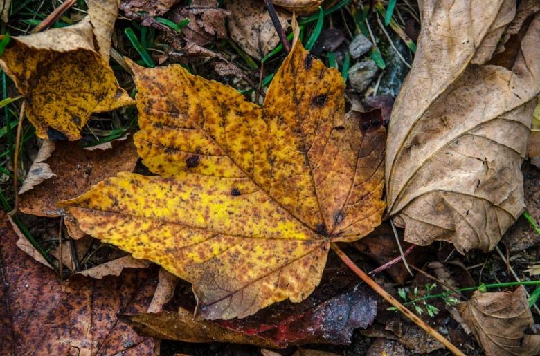 leaves-994090_960_720